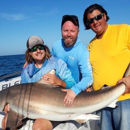 Sharks - Shark Fishing Fort Myers