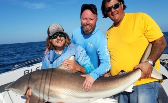 Sharks - Shark Fishing Fort Myers